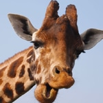 Changing Facebook profile picture to a Giraffe gives hackers your password?
