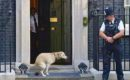 Is photo of dog pooping outside 10 Downing Street real?